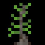 Growing Sapling