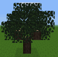 Tree pic.png